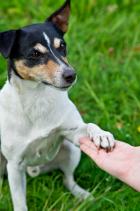 Hand holding a dog's paw.